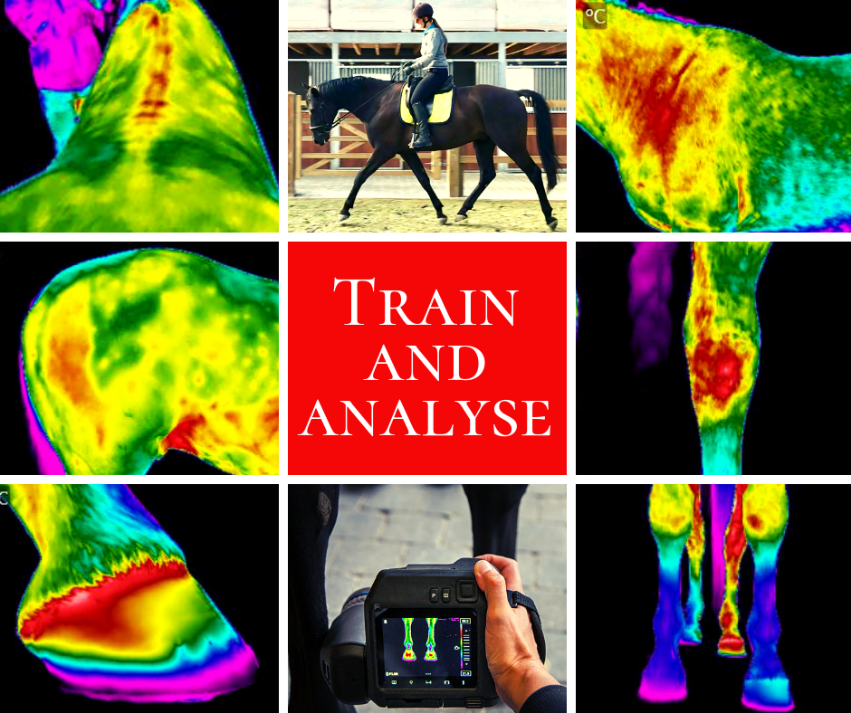 train-and-analyse