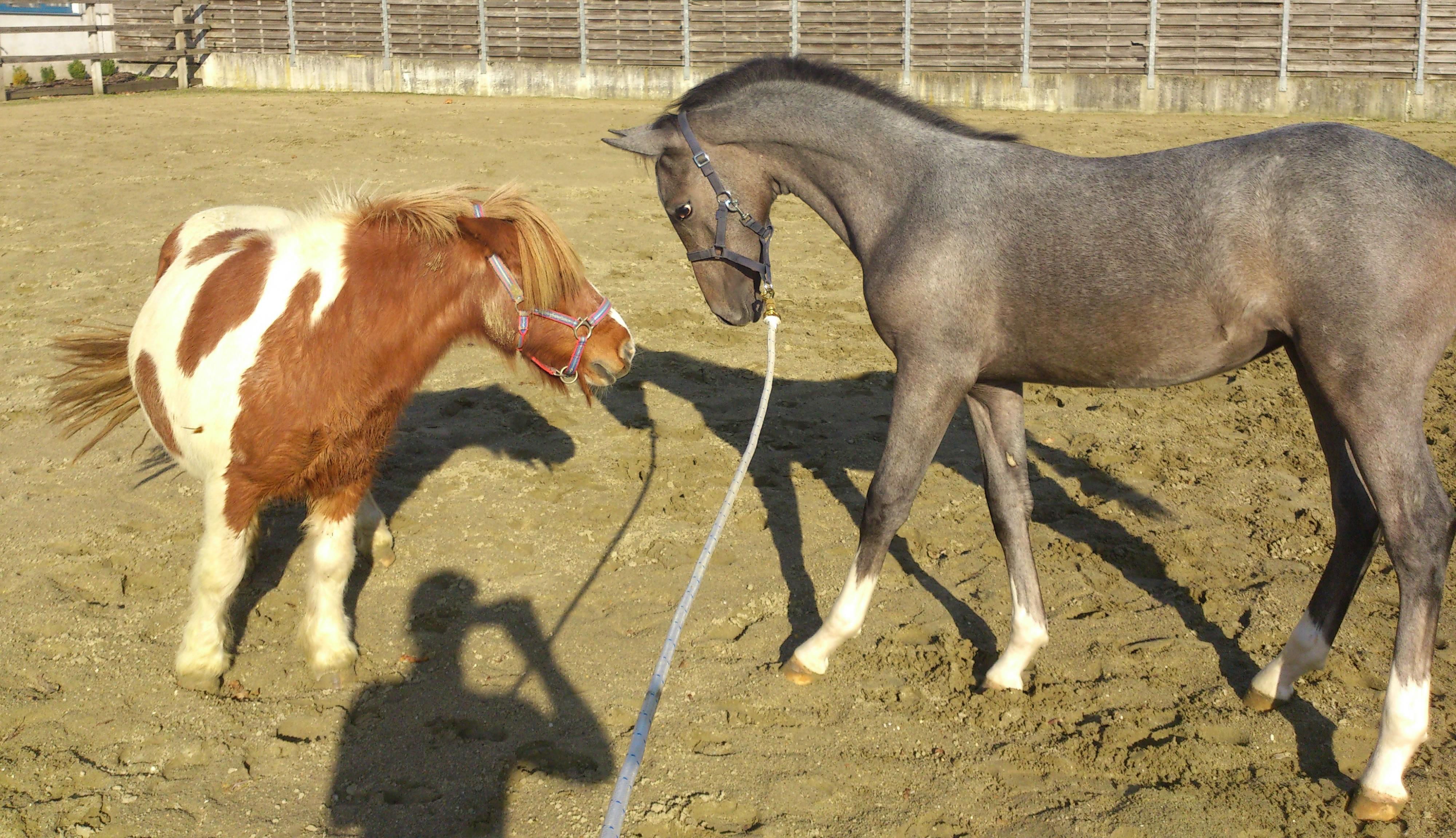 paard achterhand bespiering