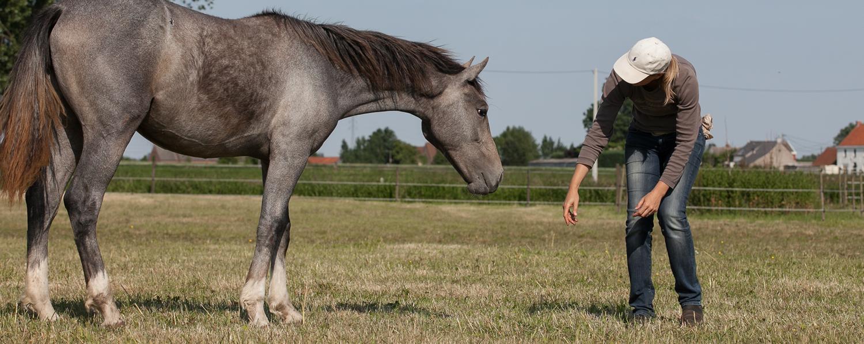 training_paard